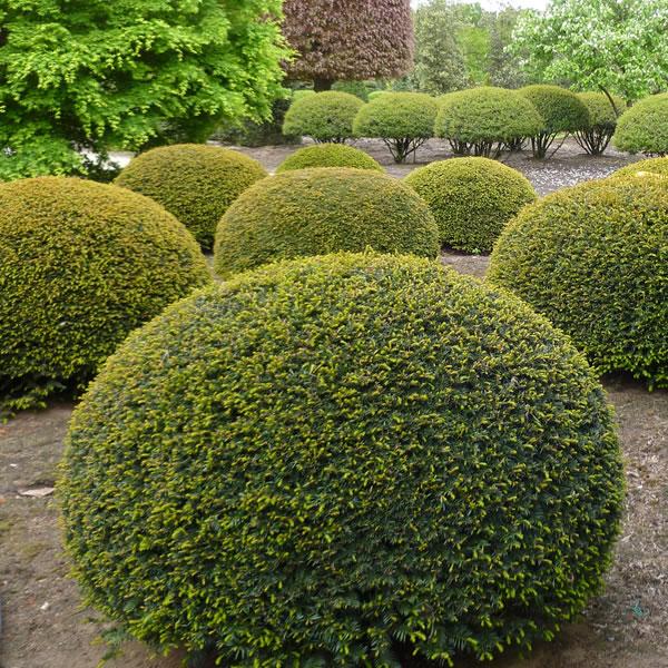Varia Vert High Quality Garden Plants Ervaar Zelf Ons Brede En
