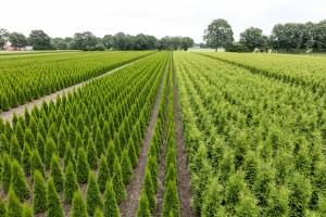 Hecken Pflanzen Varia Vert (13)