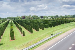 Hecken Pflanzen Varia Vert (7)