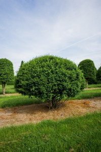 Schirmform Varia Vert (1)