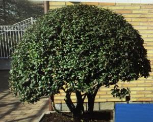 Schirmform Varia Vert (11)