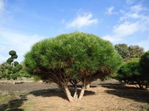 Schirmform Varia Vert (6)