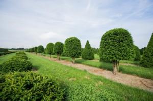 baume varia vert (5)
