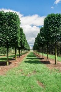 baume varia vert (9)