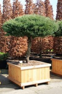 Schirmform Varia Vert (8)