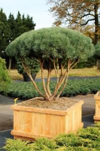 Schirmform Varia Vert (9)